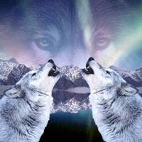 Wolves by speedychipmunk13