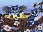 Blue Jay Kittens