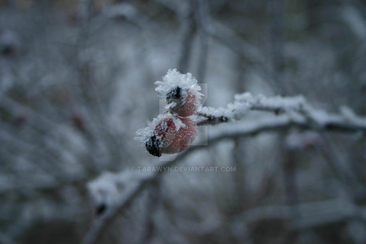 Midwinter Frost II by Tarawyn