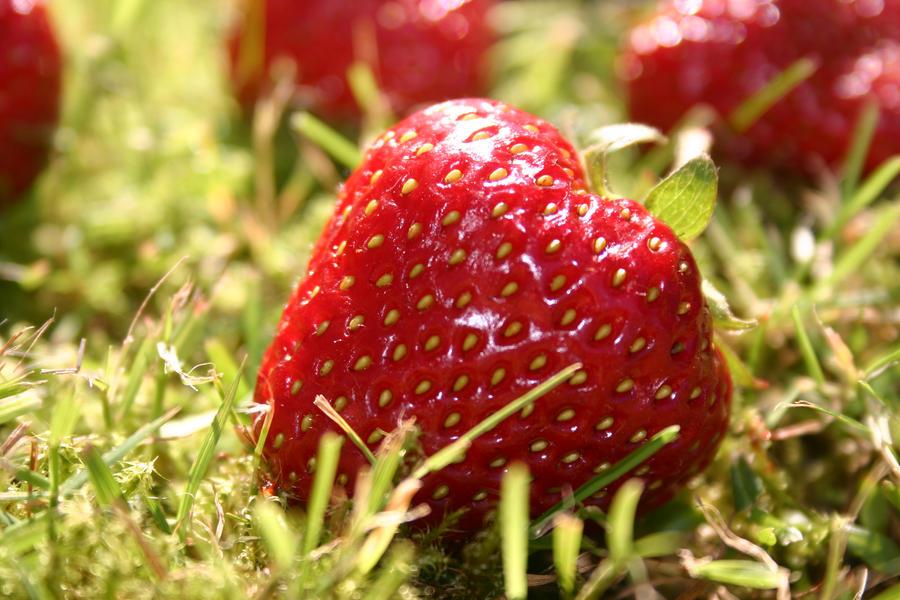 Strawberry Fields Forever by Tarawyn