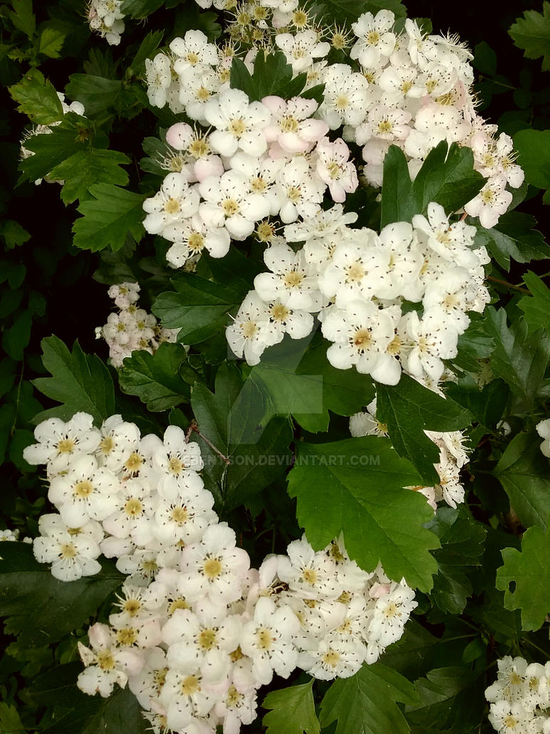 Little White Flowers By Ebentson On Deviantart