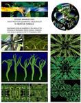 Hydra Portfolio Page