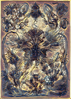 Haeckel Variation 5