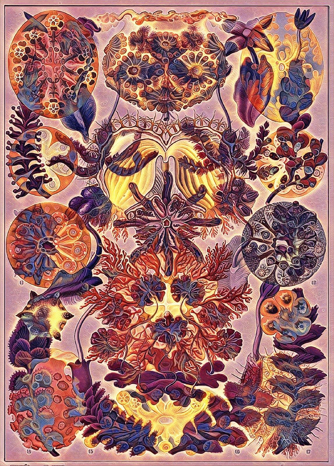 Haeckel Variation 8 by james119