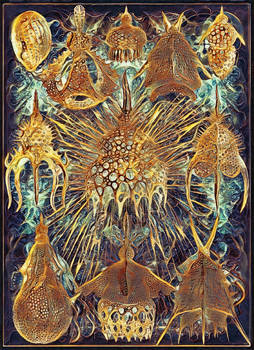 Haeckel Variation 11: The Crown Jewels of Carcosa