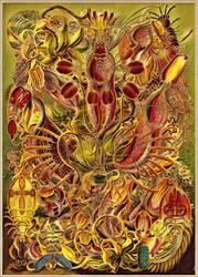 Haeckel Variation 12a