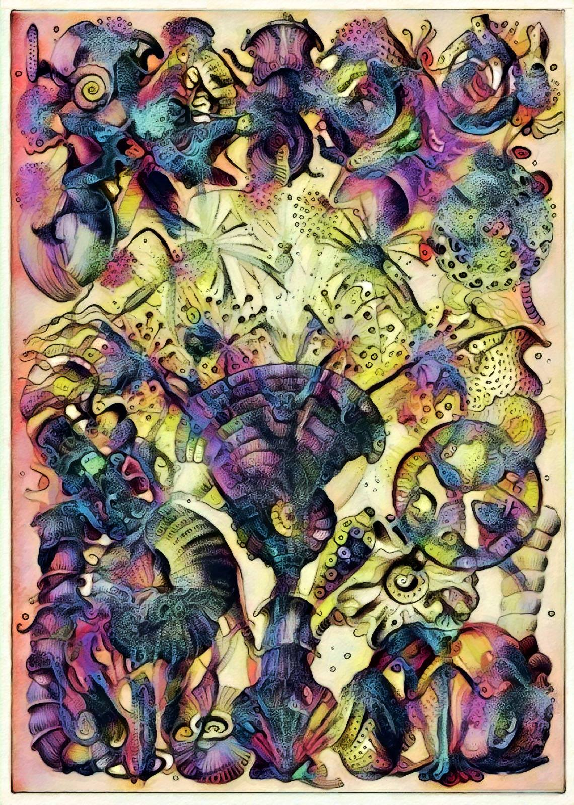 Haeckel Variation 22b