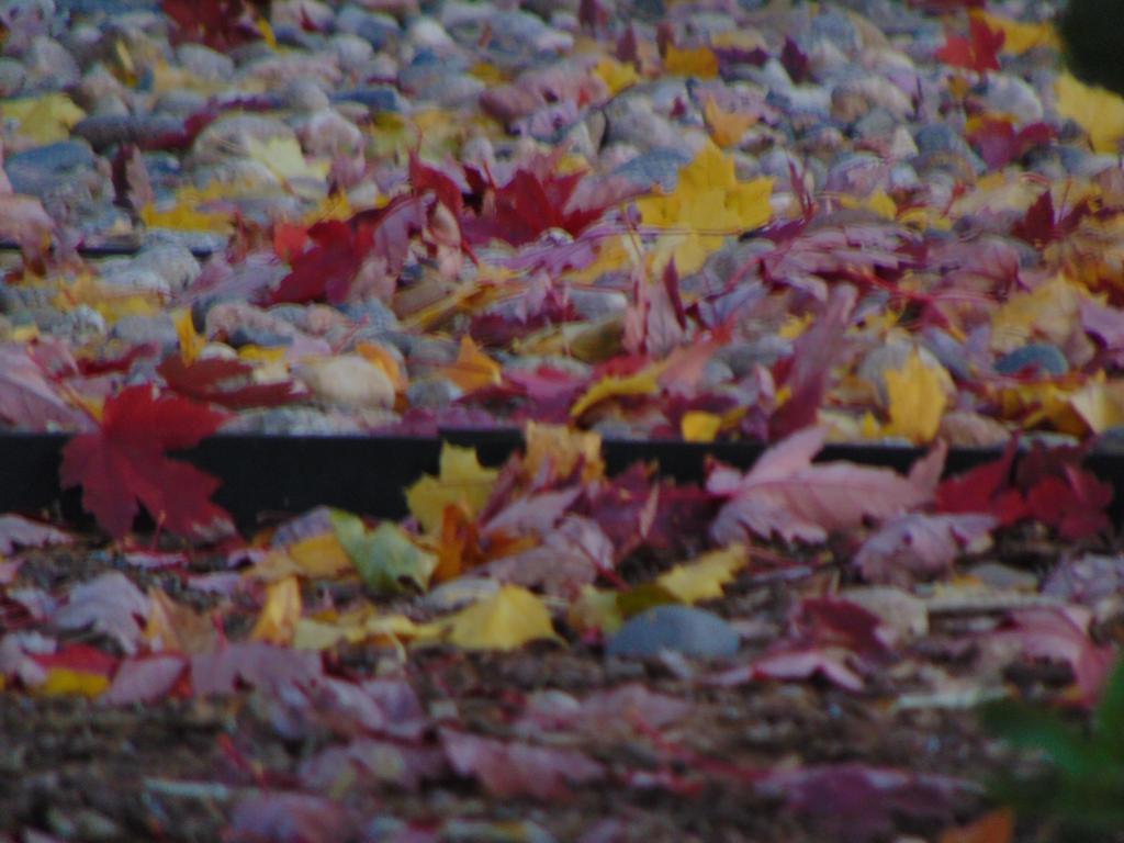 Colorful Dancing Leaves 007 by amethystmstock