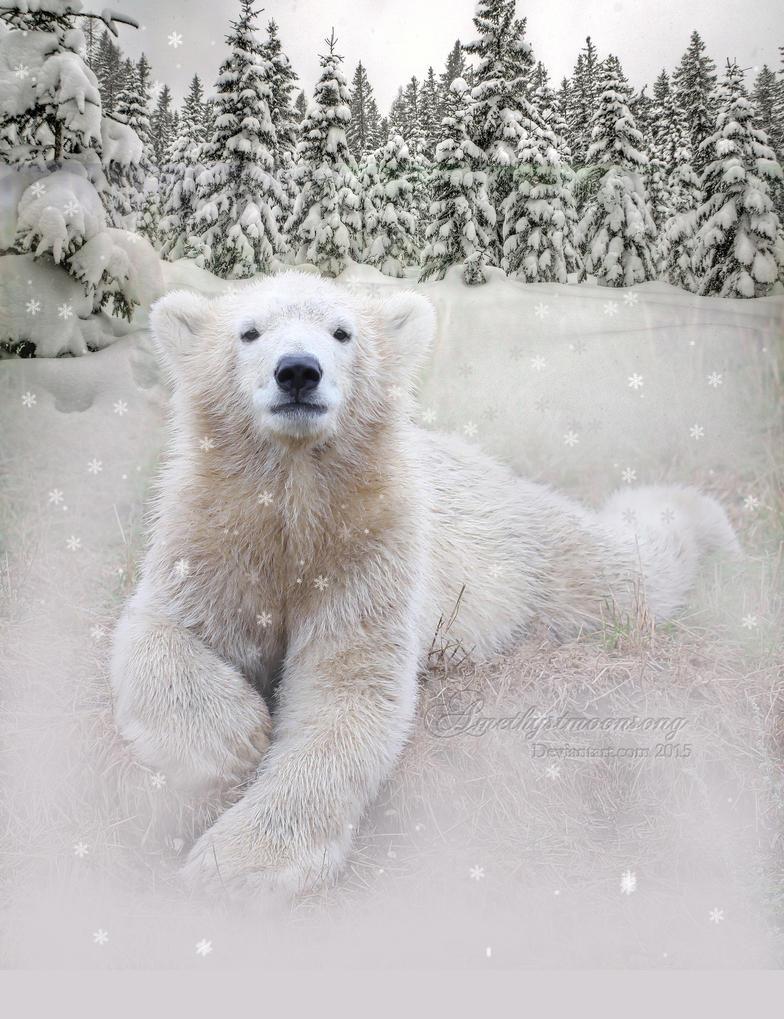 Snow Bear by amethystmstock