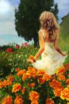 Marigold Meadow
