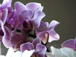 Orchids 006