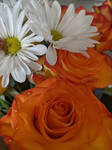 Tangerine kissed roses and white daisies 002