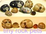 Tiny Rock pets