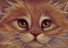 Yellow Tabby Ginger Kitten by carefulwhatyawishfor