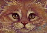 Yellow Tabby Ginger Kitten