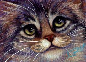 Mini Tiger Tabby Kitten by carefulwhatyawishfor