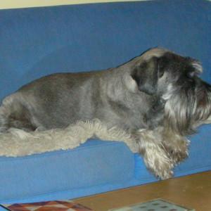 teshok's Profile Picture