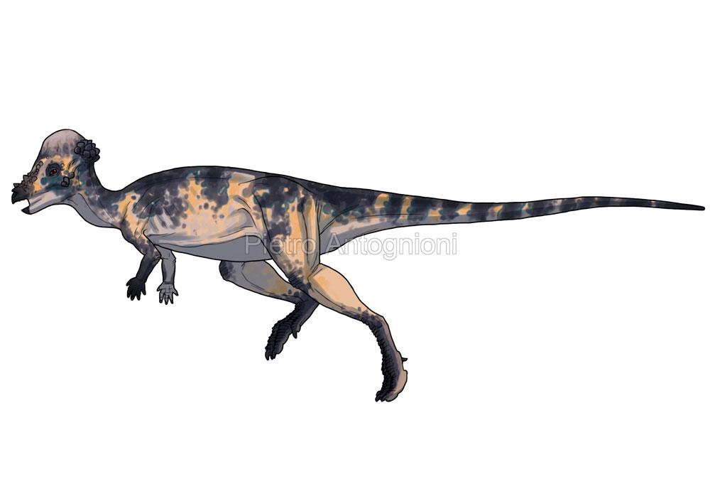 Pachycephalosaurus by pietro-ant