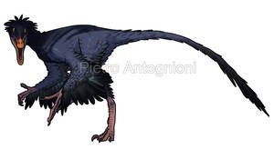 Buitreraptor by pietro-ant
