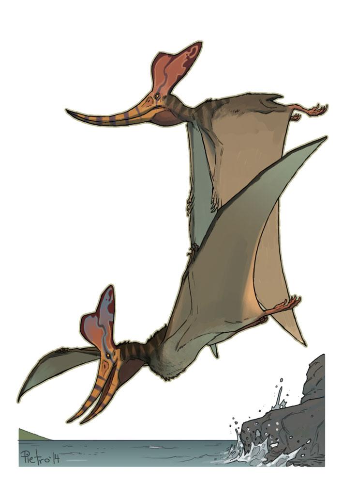 Pteranodon by pietro-ant