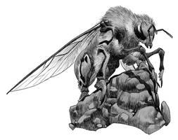 Griffon Bee