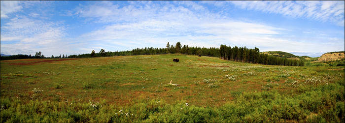 Muskox meadow - Panorama