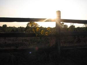 Country Sunflower Sunet