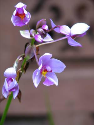 Purple orchids by Eleima