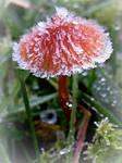 Fungi on Ice