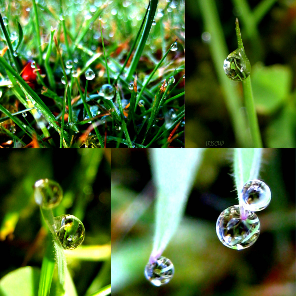 Drop Drop Drop by iriscup