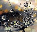 Orange Drop by IRIS-KUPP