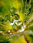 Green Drop 3