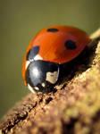 Ladybird 19