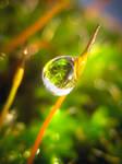 Moss Drop