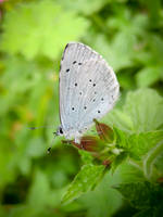 Small Blue by IRIS-KUPP