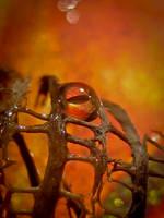 Eye of the Storm by IRIS-KUPP