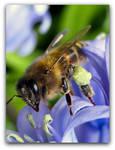 Bluebell Honey