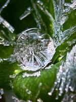 Ice Drop by IRIS-KUPP