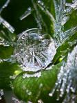 Ice Drop