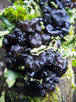 Black Witches Butter
