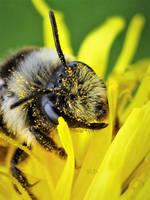 BEE by IRIS-KUPP