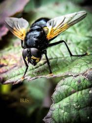 Noon Fly by IRIS-KUPP