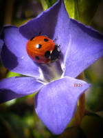 Spring lady by IRIS-KUPP
