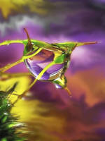 Drop the Moss by IRIS-KUPP