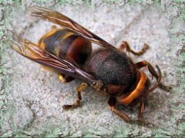 WASP by IRIS-KUPP
