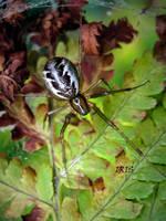 Spider by IRIS-KUPP