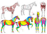 Horse Body study