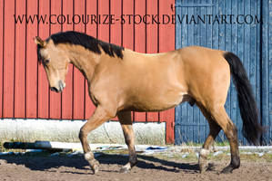 Warmblood 12 by Colourize-Stock