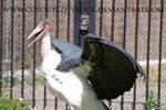 Bird Stock 4