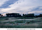 Landscape Stock 13